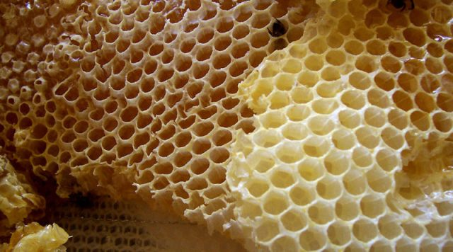 honeycomb-800x445